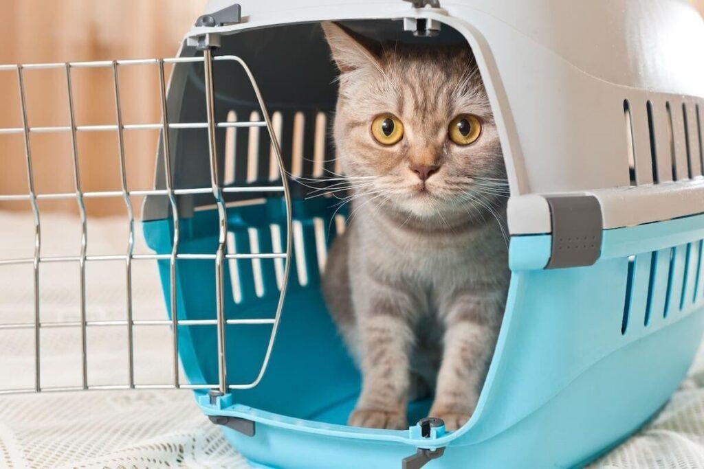 gatto nel trasportino aperto