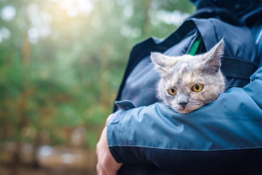 gatto in braccio nel bosco
