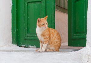 gatto davanti all'uscio di casa