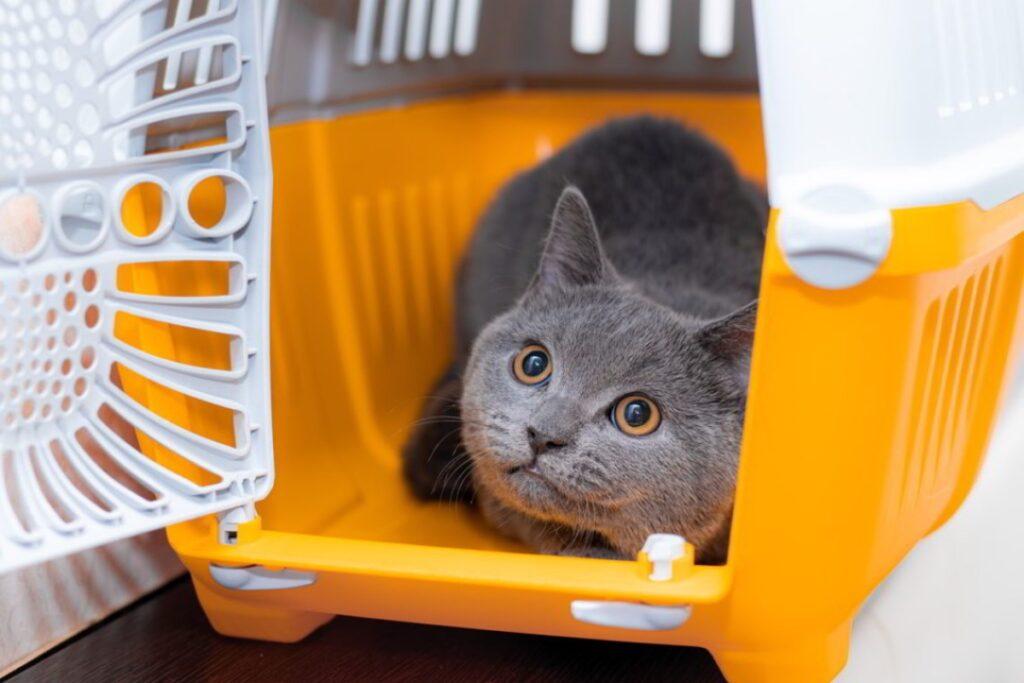 gatto spaventato dentro il kennel