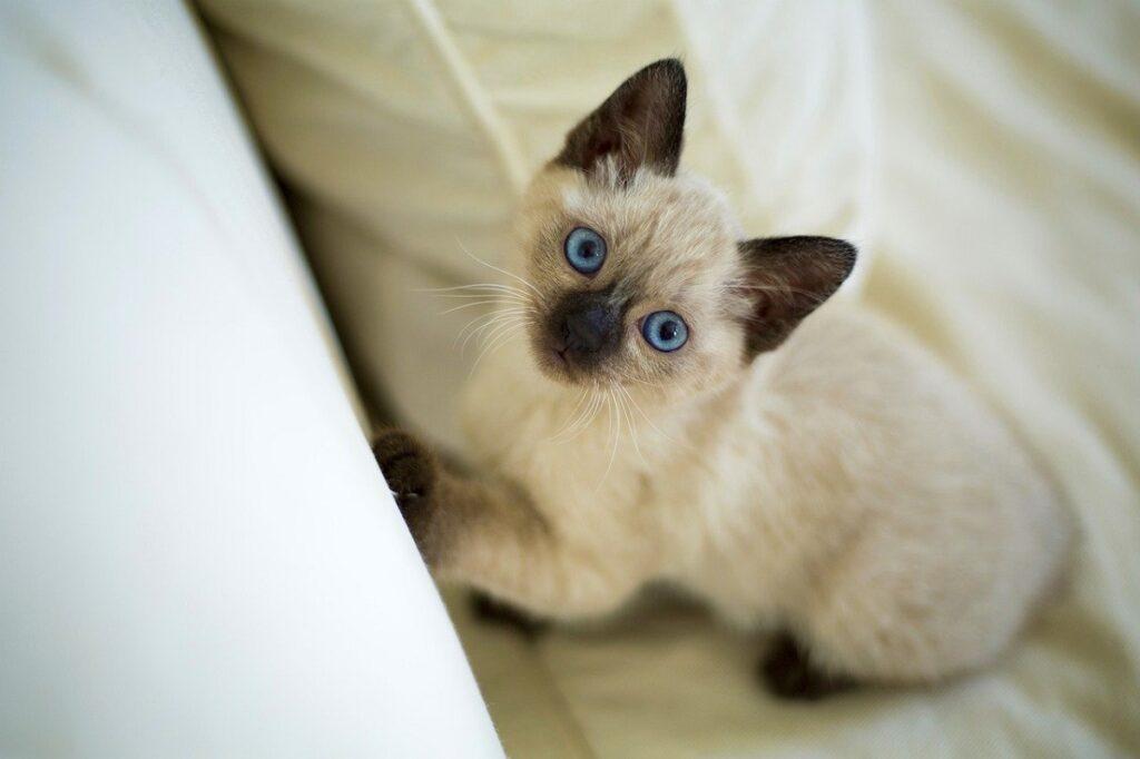 gatto letto micio