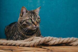 gatto soriano splendido