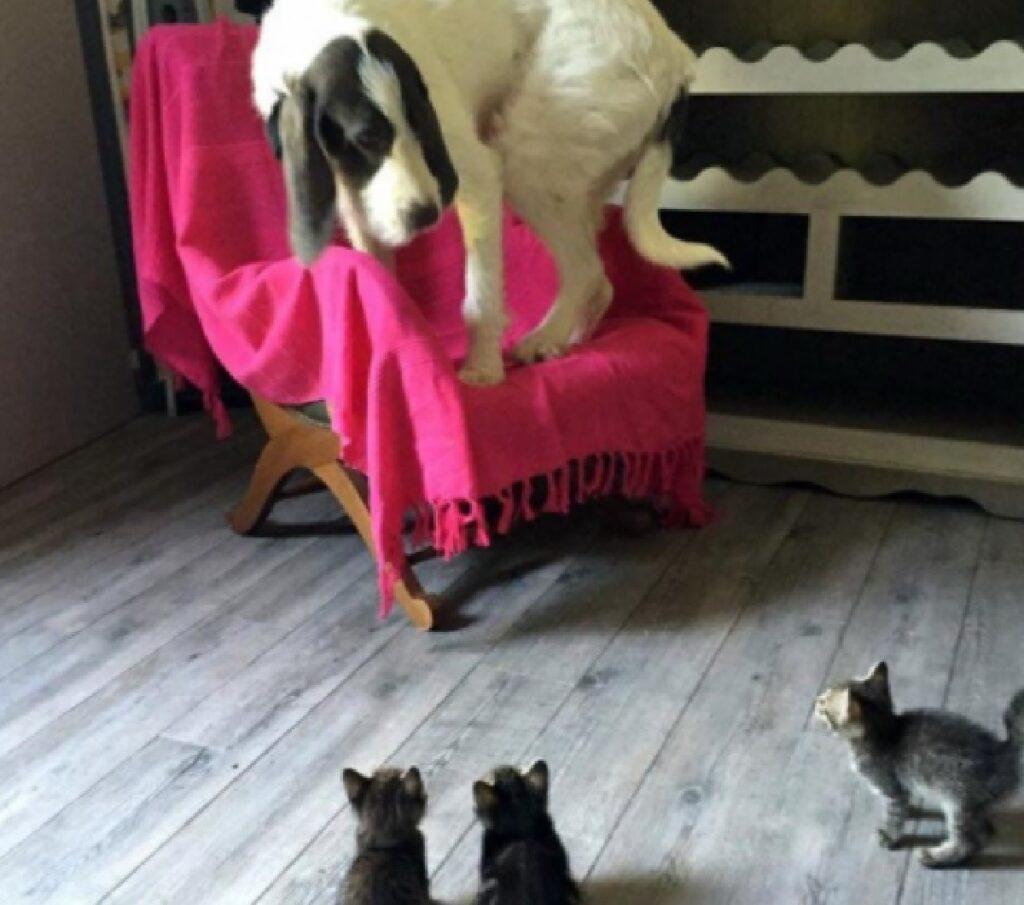 gatti accerchiano altro cane