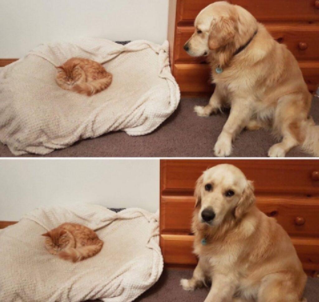 gatto ruba posto dormire cane