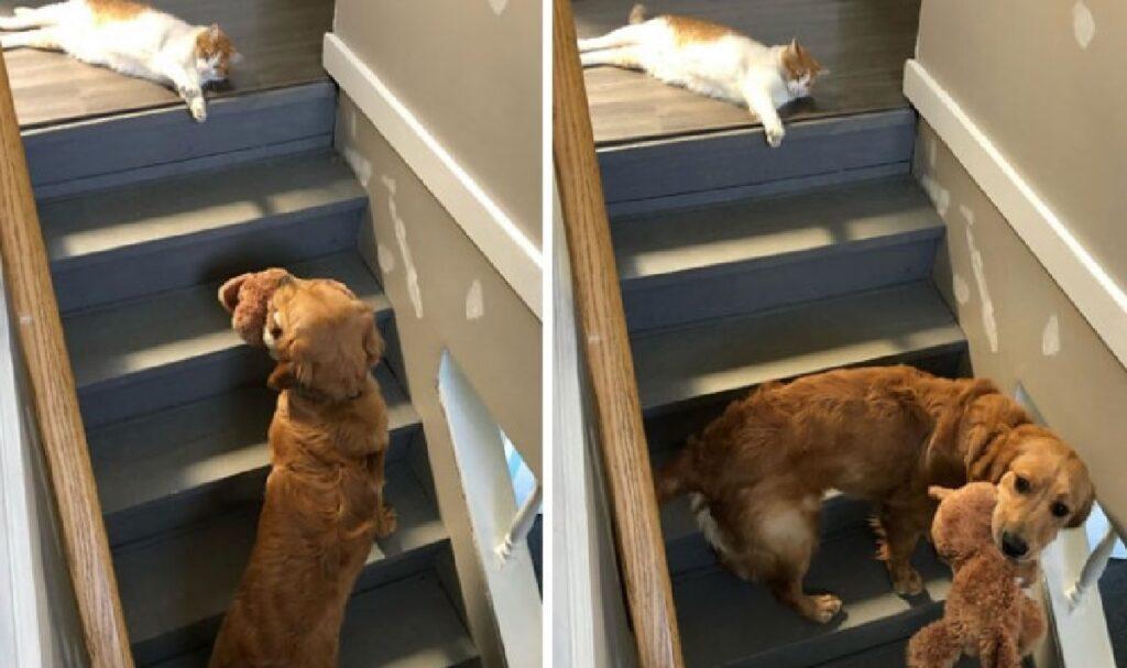gatto non fa salire cane scale