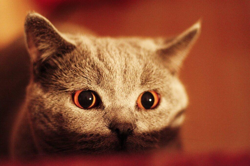 gatto pronto all'agguato