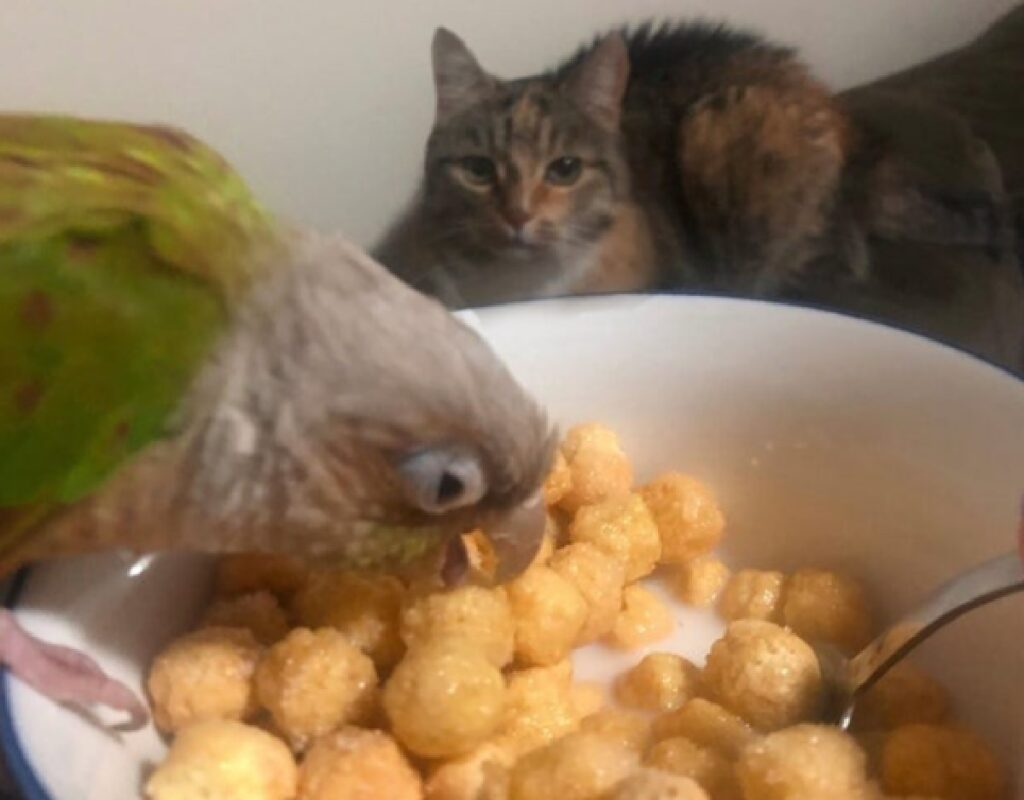 gatto vero obbiettivo uccello