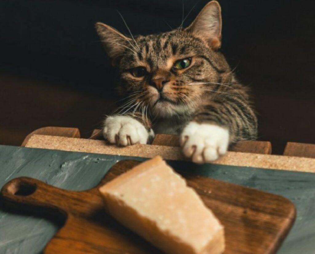 gatto con formaggio su tagliere