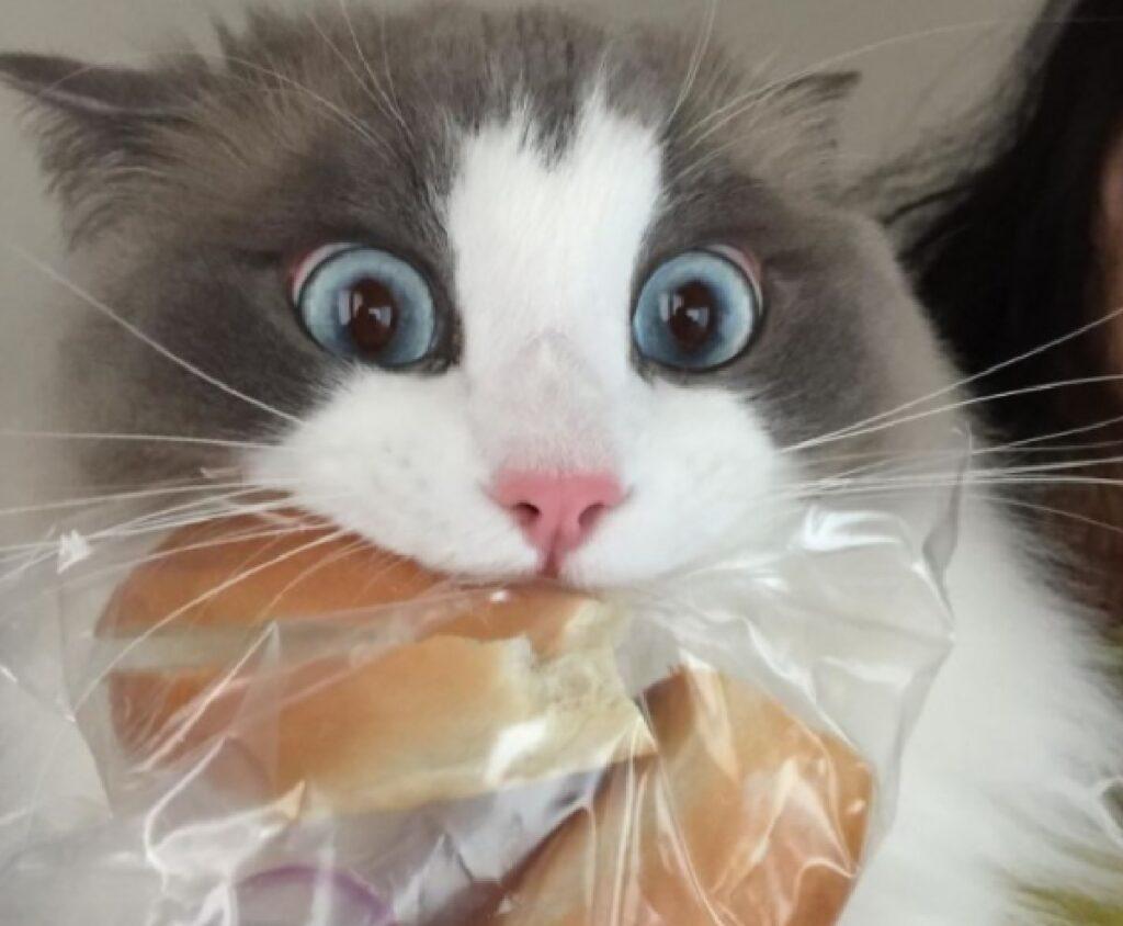 gatto plastica cornetto dentro