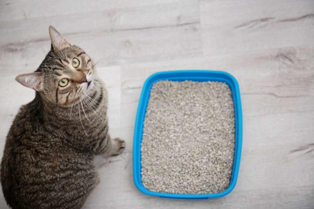 gatto e lettiera