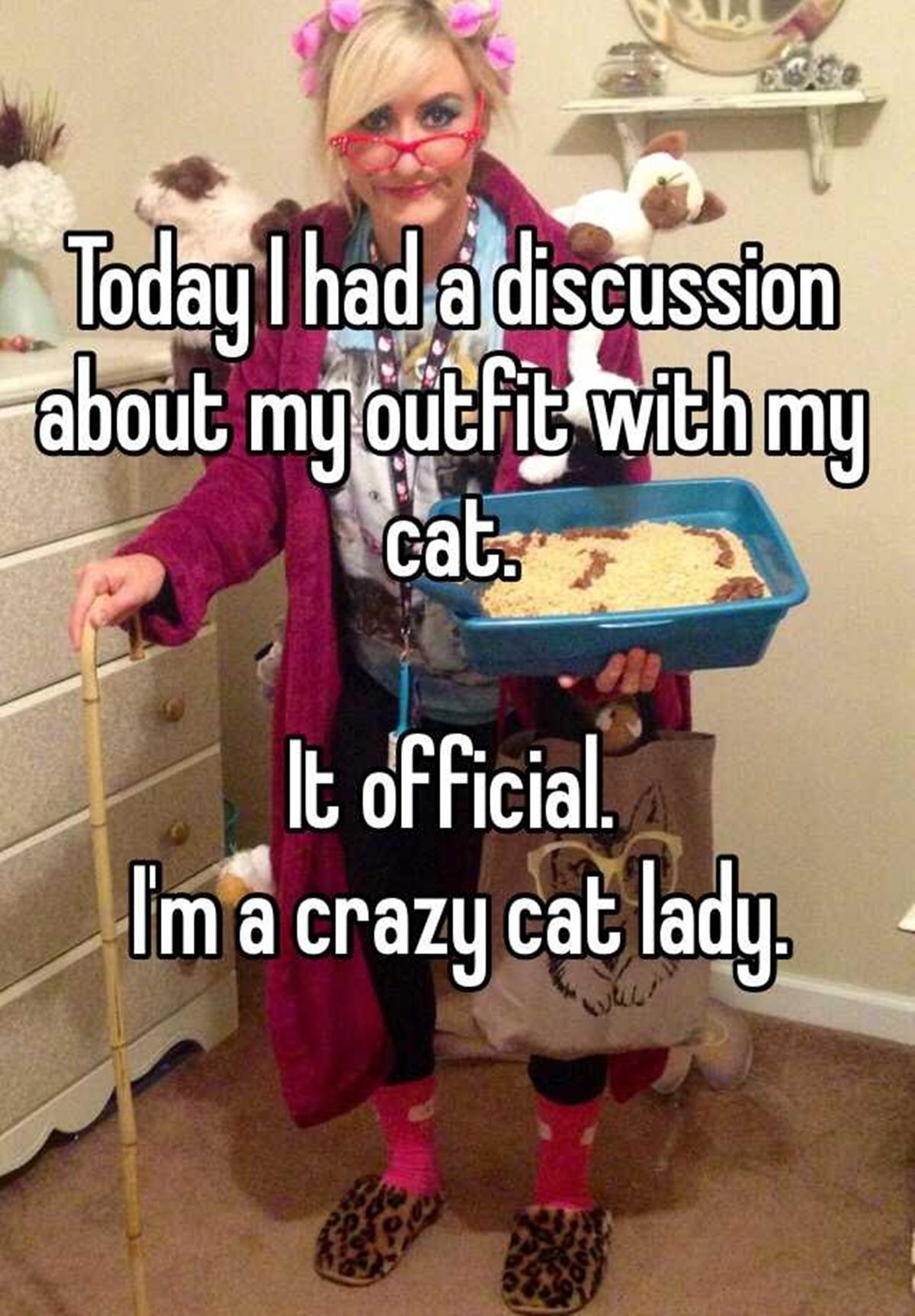 gatto critico