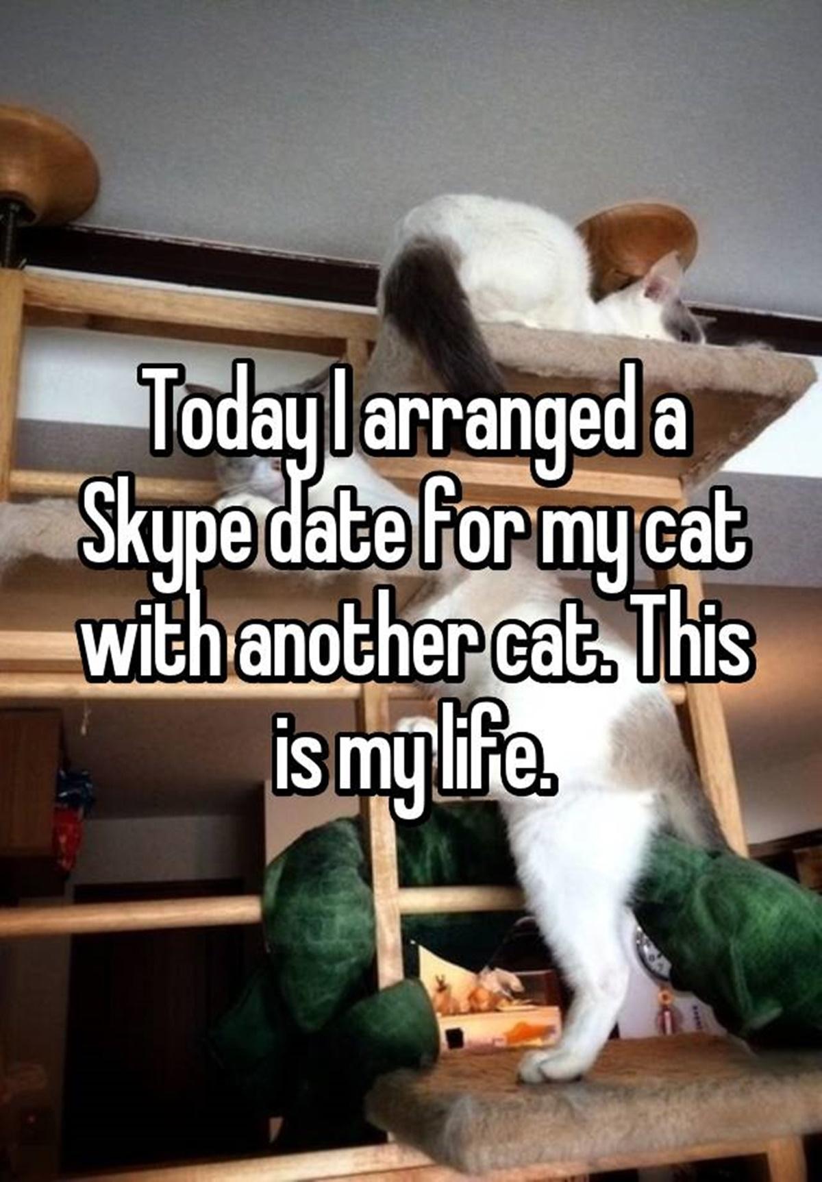 chiamata Skype tra gatti