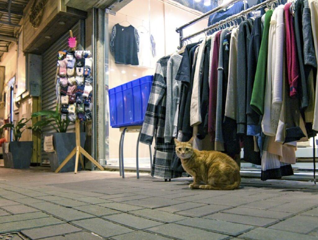 gatto felix davanti negozio