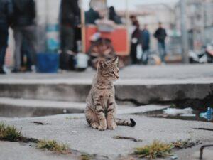gatto felix scompare dopo 8 anni