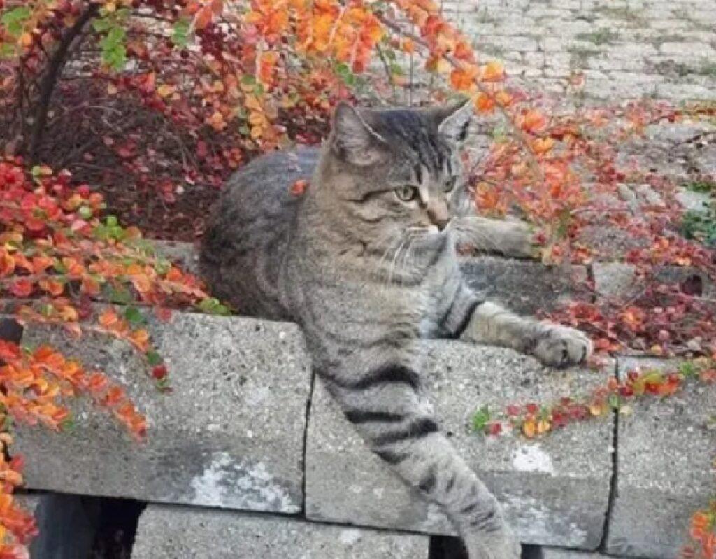 gatto shapo tigrato scalini pietra