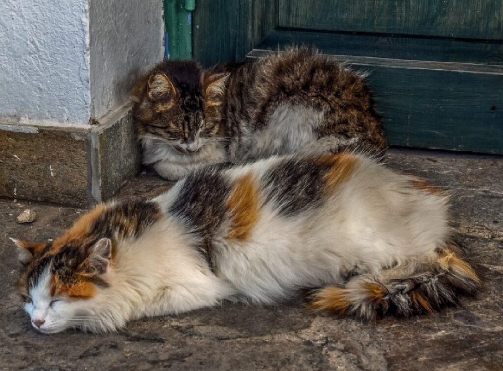 gatti di strada dormono vicino casa