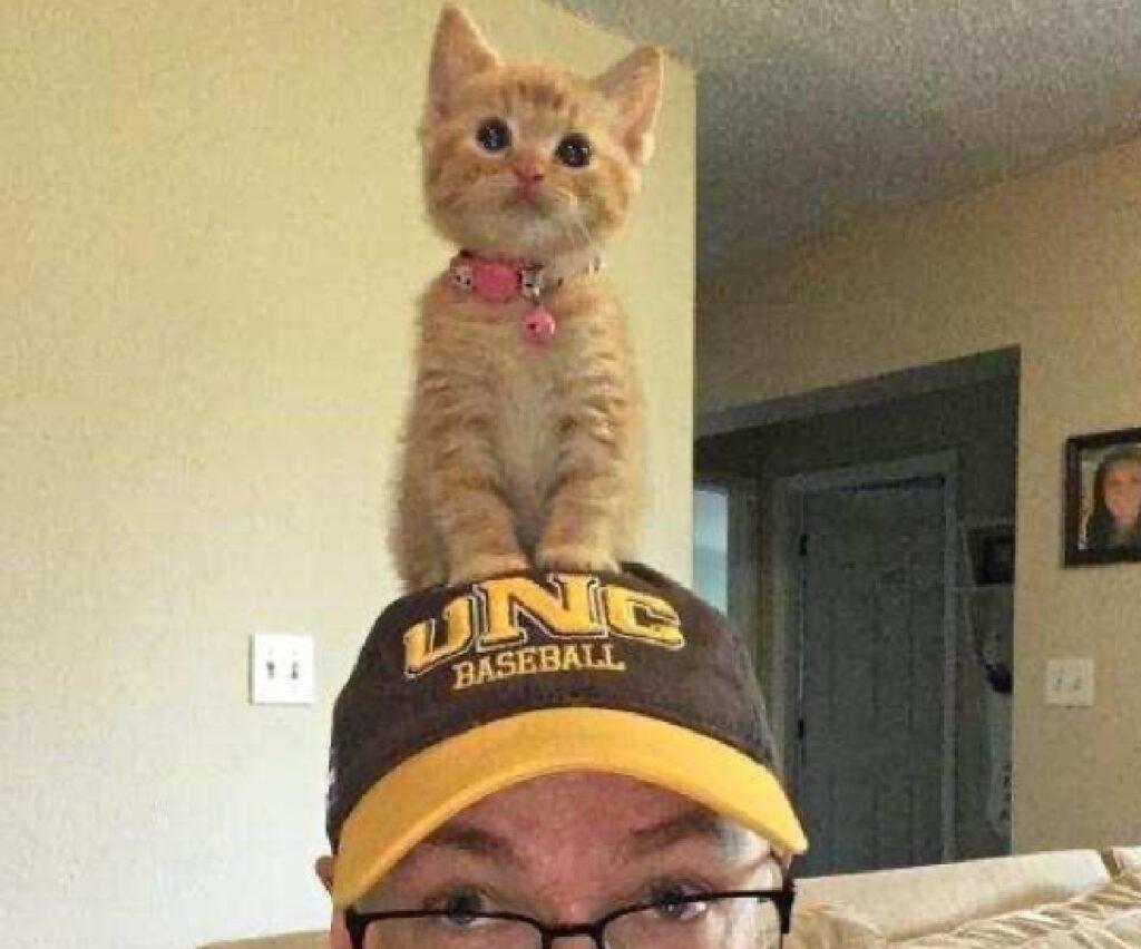 gatto seduto cappello giallo