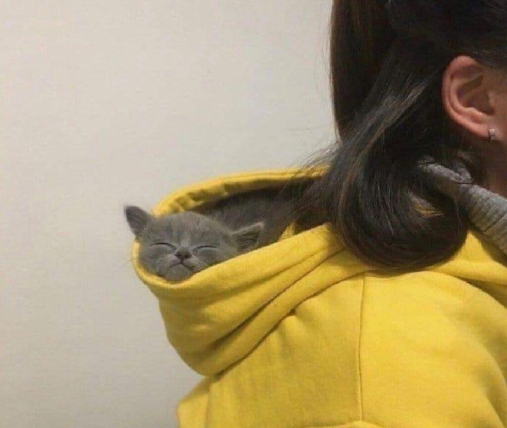 gatto relax cappuccio giallo