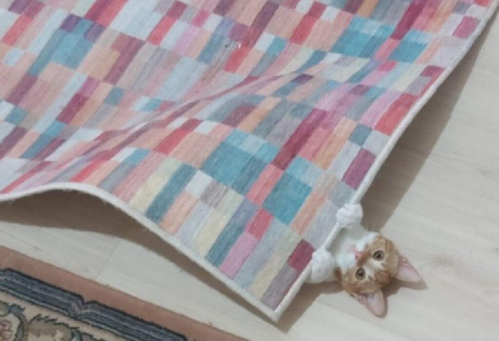 gatto sotto tappeto coperta