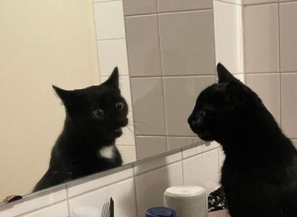 gatto guarda prima volta specchio