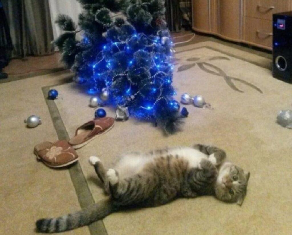 gatto fa cadere albero di natale sera