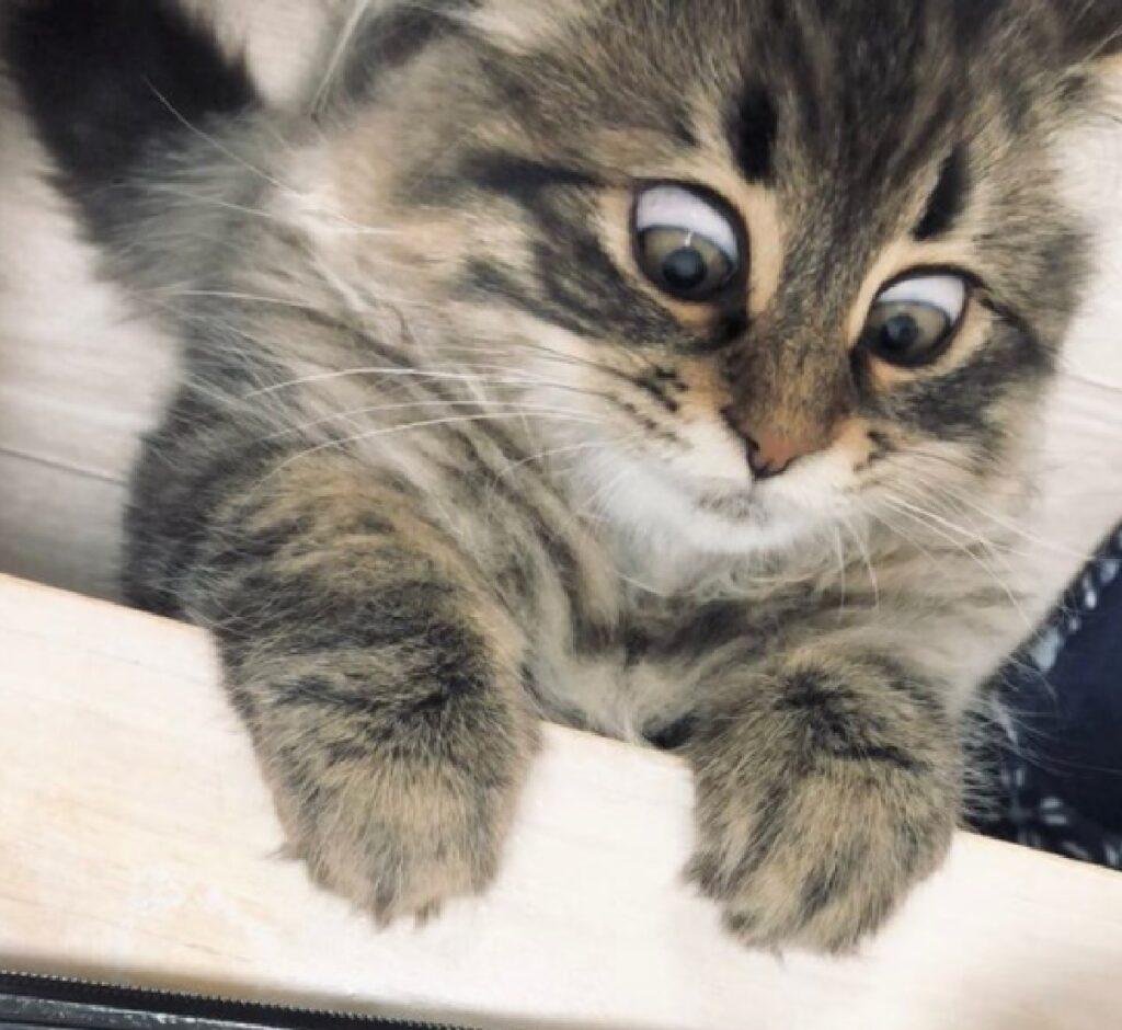 gatto occhi completamente sbarrati