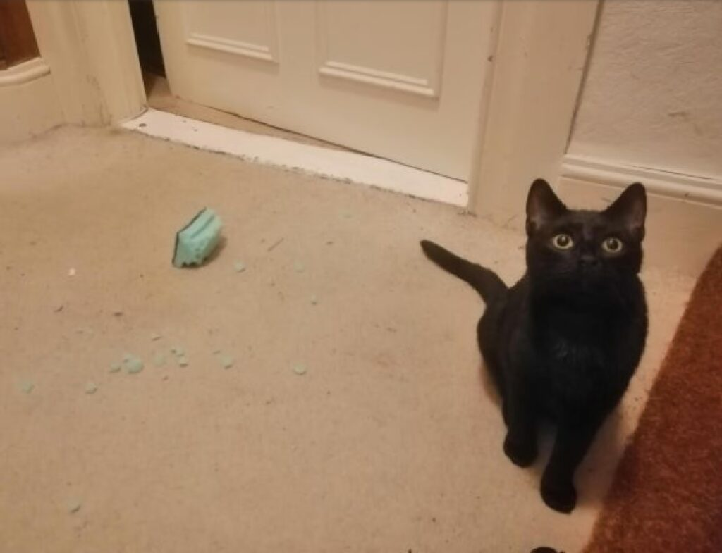 gatto nero rompe statuetta