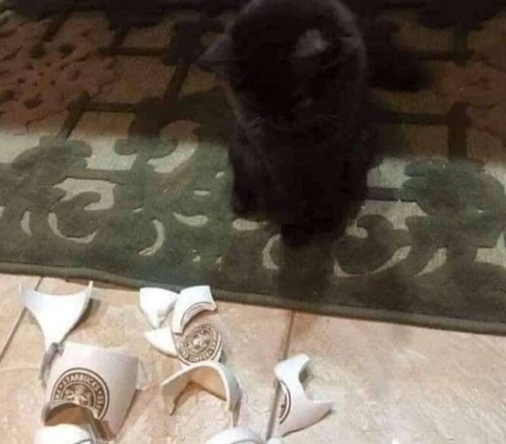 gatto nero rompe porcellana