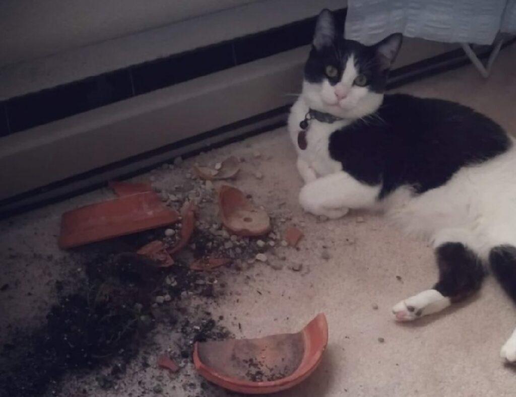 gatto rovescia vaso fiori