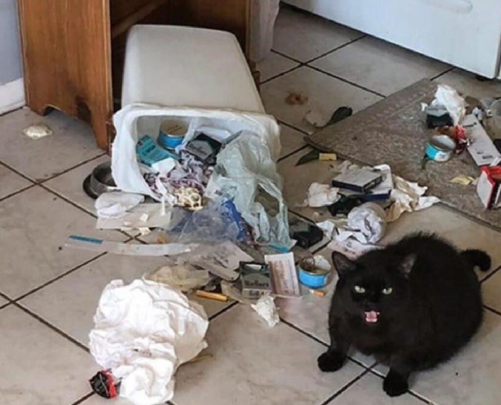 gatto cerca qualcosa spazzatura
