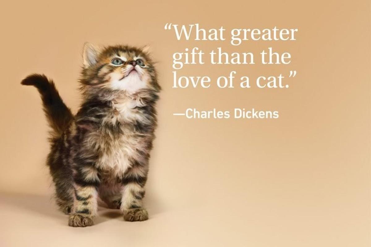 C.D. gatti regalo amore
