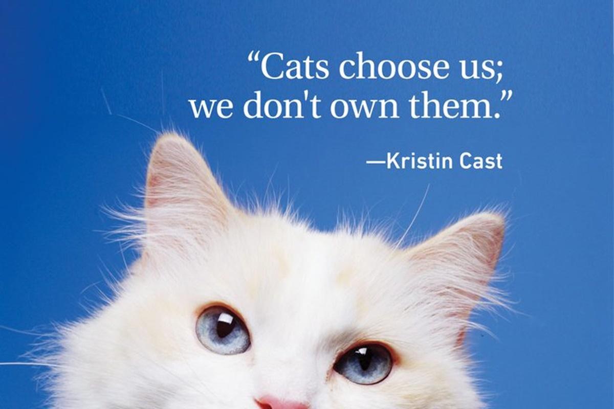 K.C. gatti indipendenti