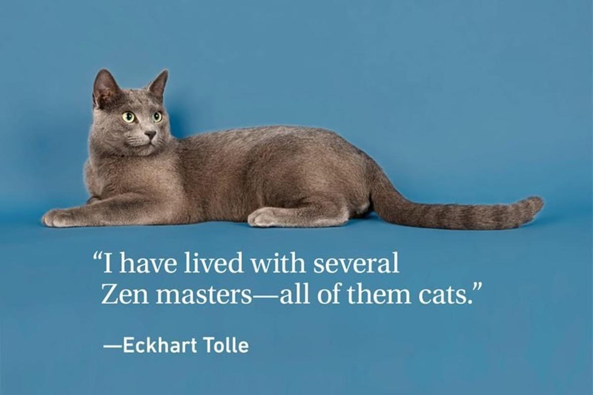 E.T. gatti zen