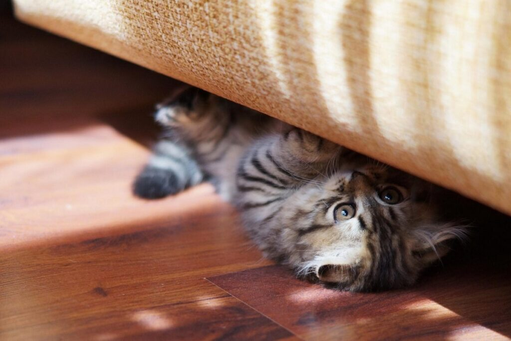 gattino sotto al divano