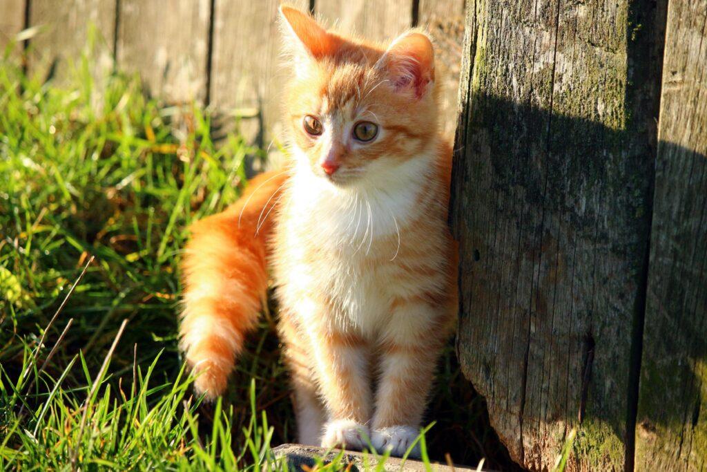 cucciolo di gatto in giardino