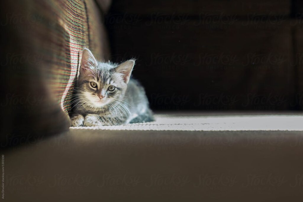 gattino al sole