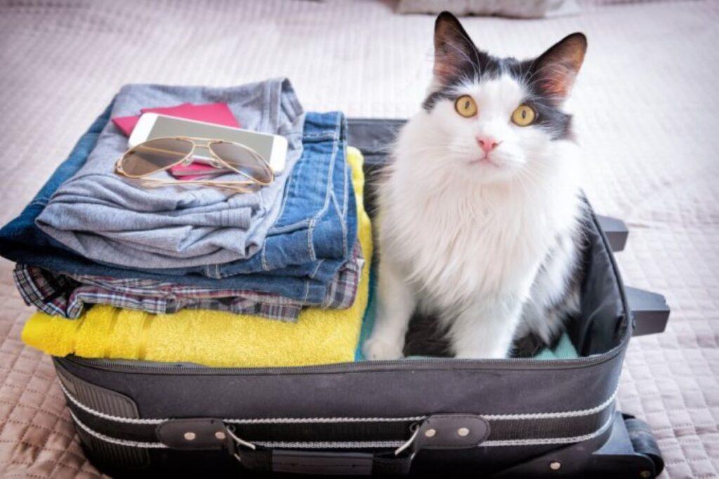gatto insieme ai vestiti in valigia