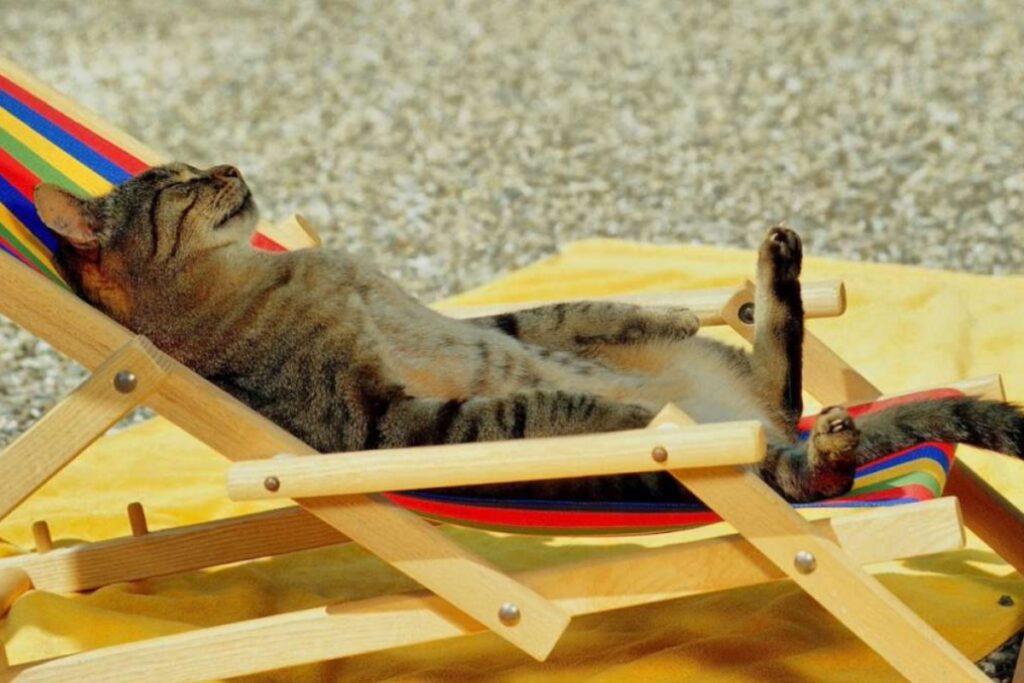 gatto prende il sole