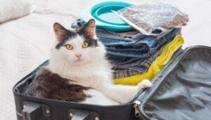 gatto nella valigia