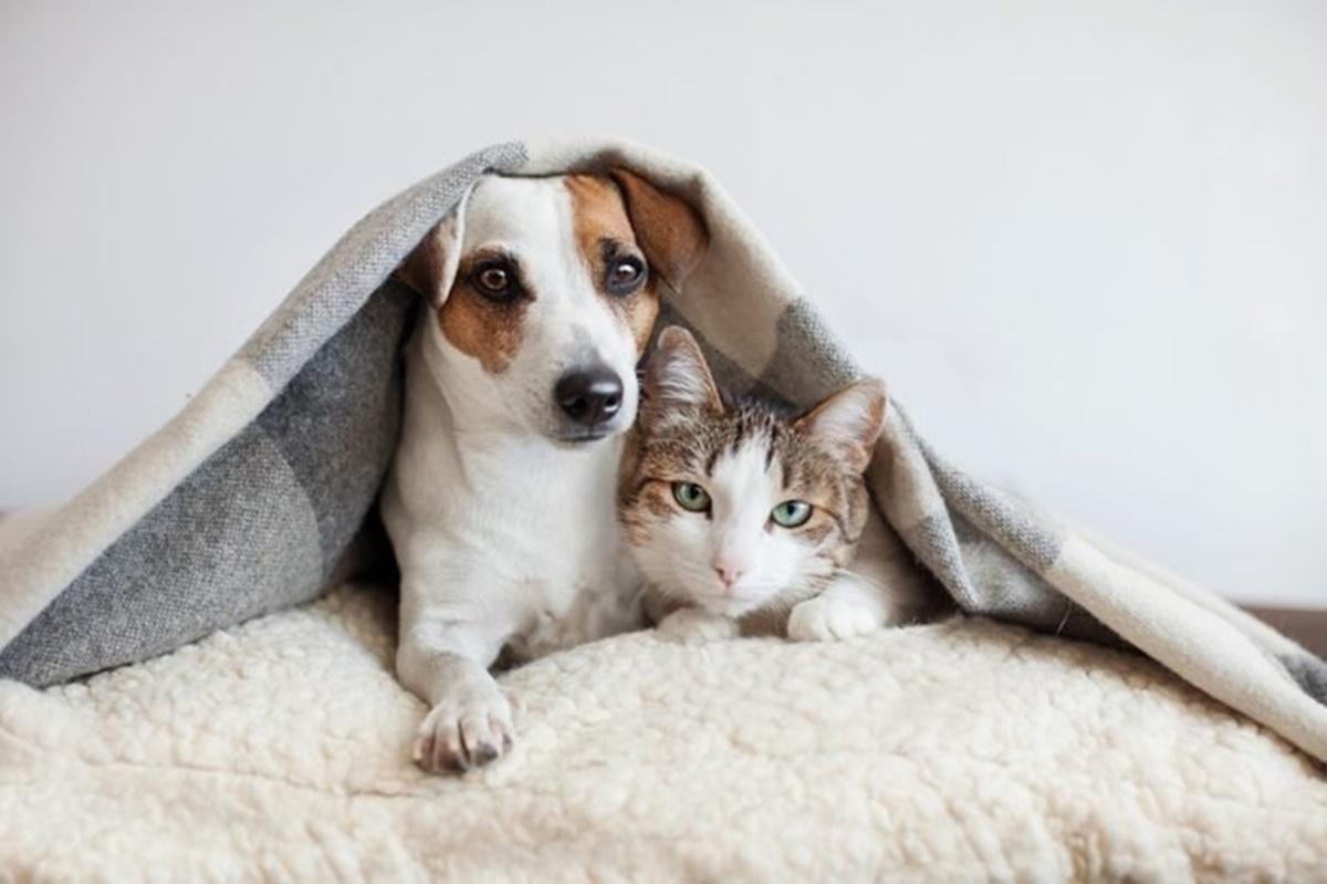 gatto e cane sotto la coperta