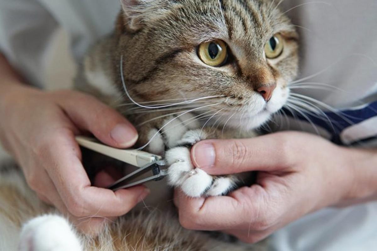 gatto e tagliaunghie