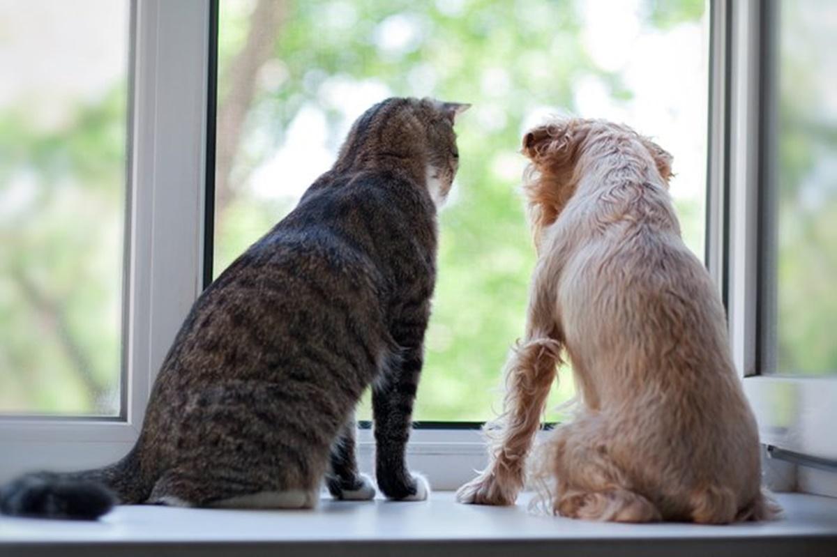 gatto e cane alla finestra