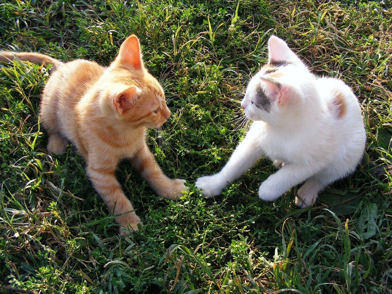 cucciolo di gatto sull'erba