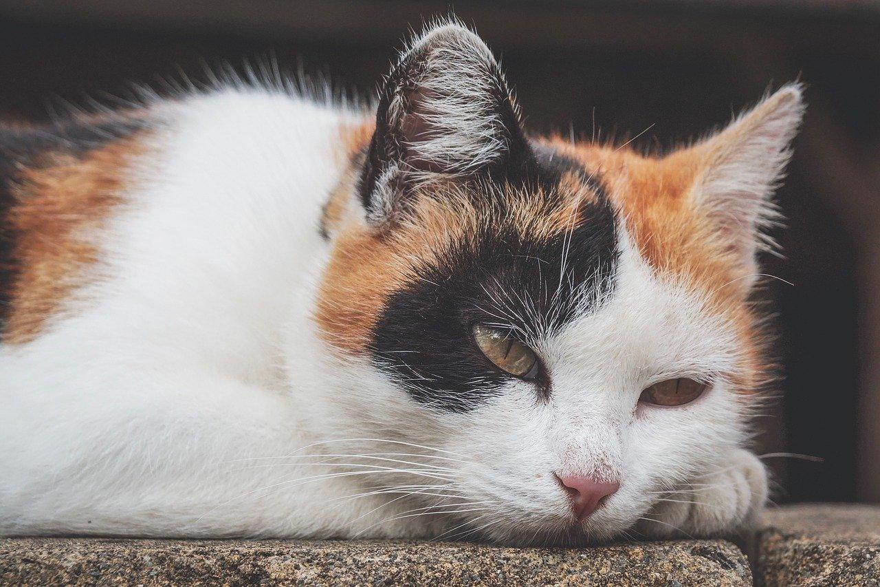 gatto giù di morale