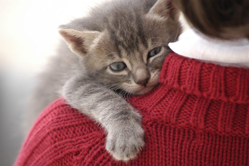 gattino sulla spalla