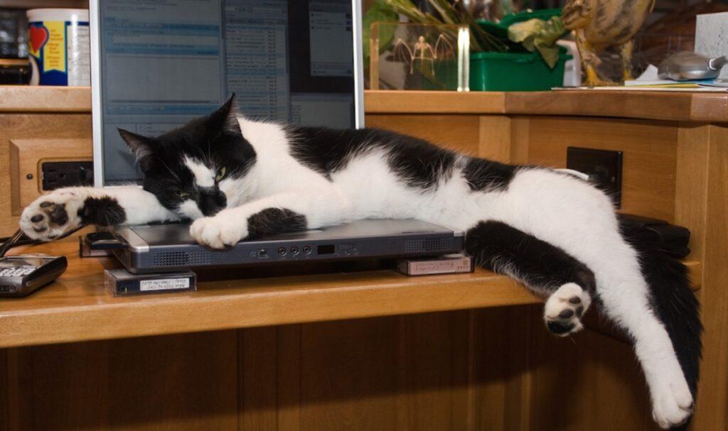 micio riposino computer