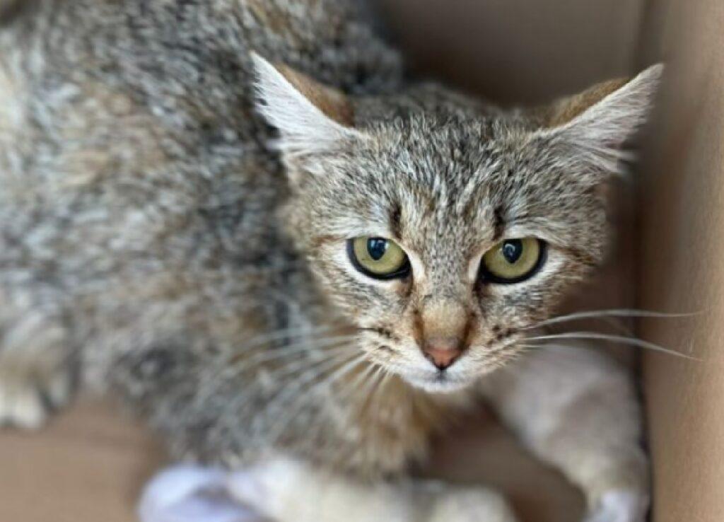 sally gatta dentro scatolone