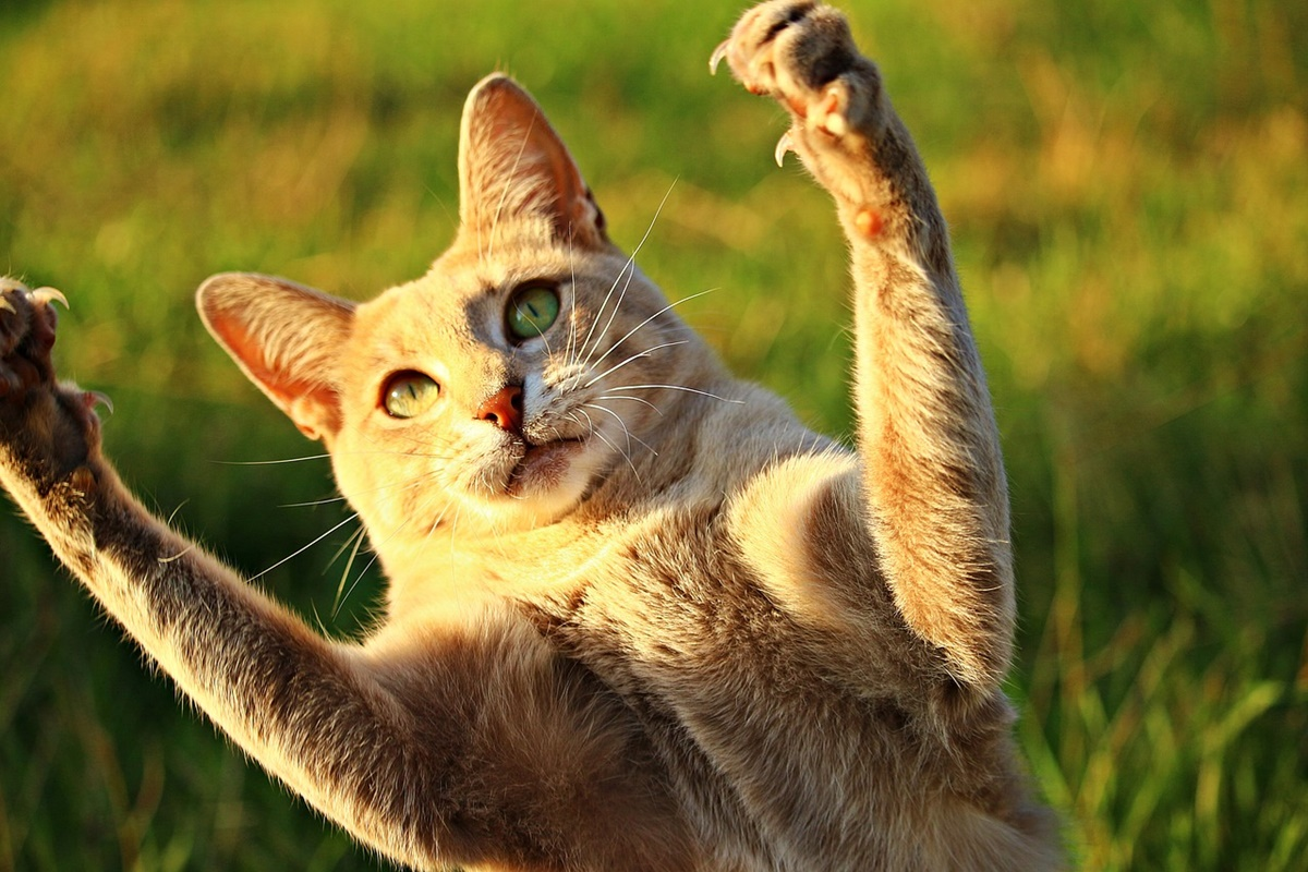 gatto zampe