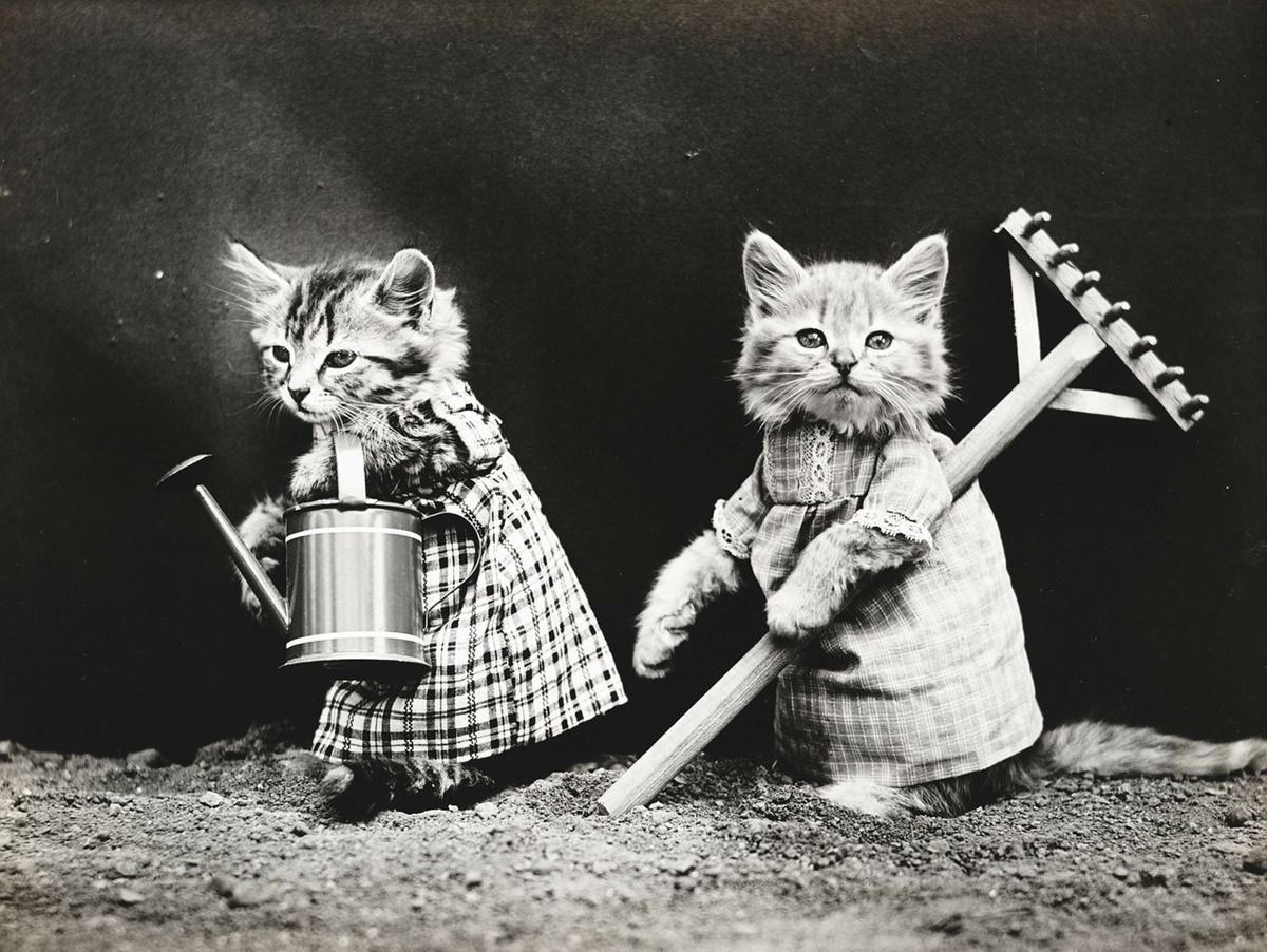 gattini lavoratori
