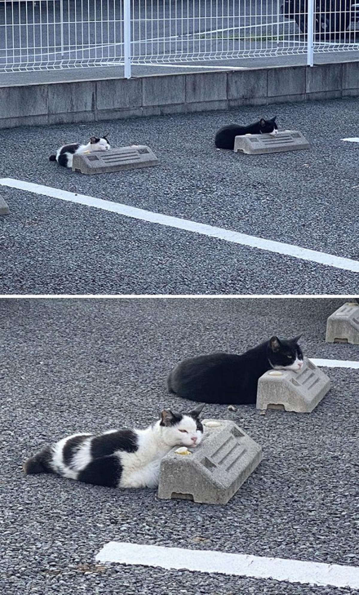 gatti gruppo nel parcheggio